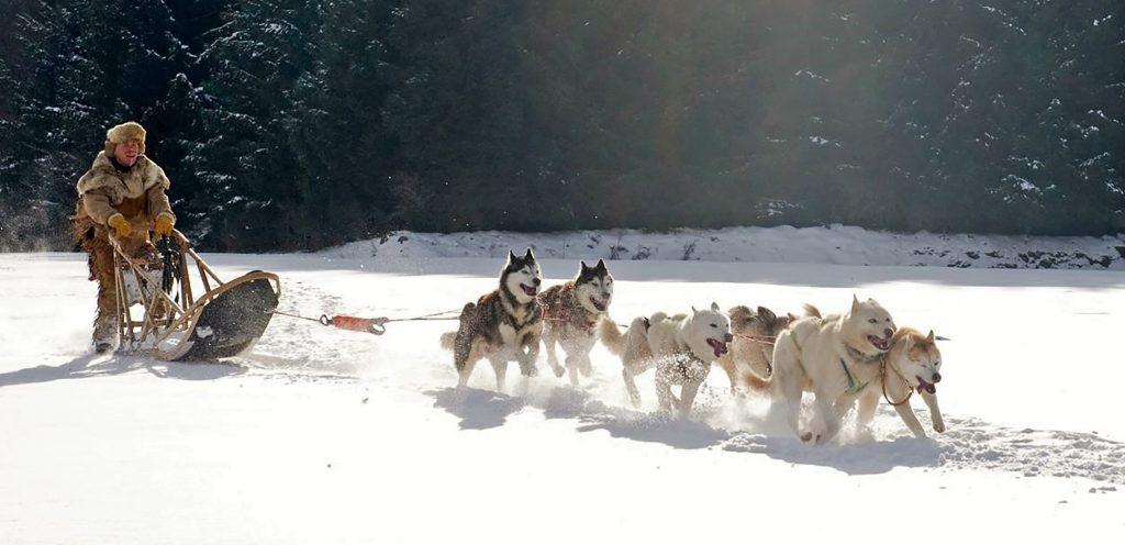 Algemene voorwaarden De Gooise Hondencoach