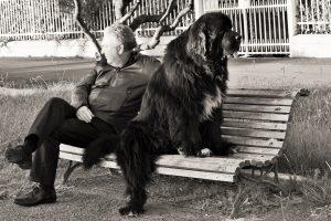 de juiste hond