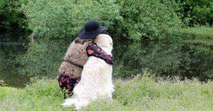 Hulp bij adoptie hond