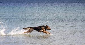 De Gooise Hondencoach onze doelen