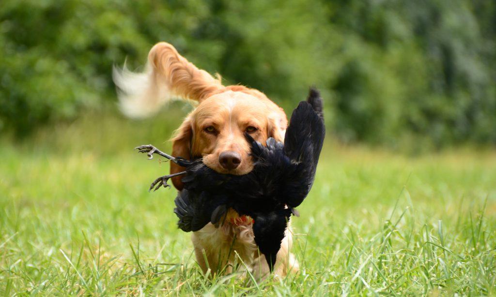 over beheersen van opwinding bij je hond