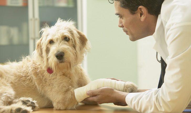 11 tips voor een ontspannen dierenartsbezoek
