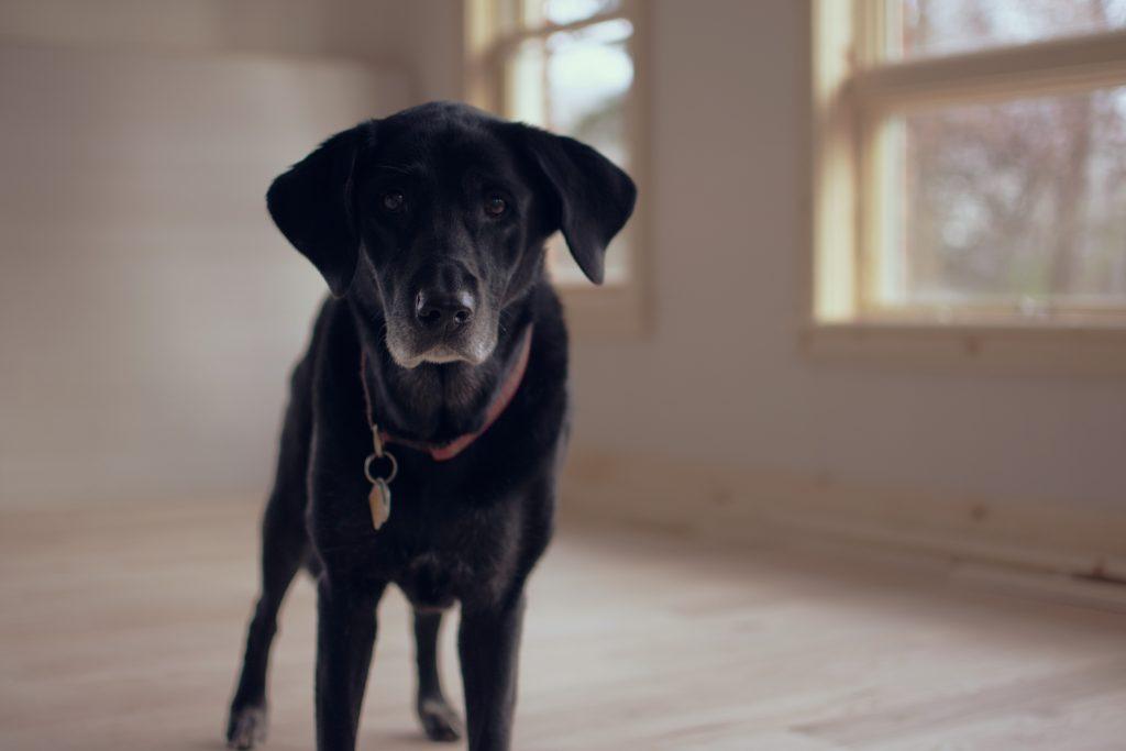 lichaamstaal onzekere hond